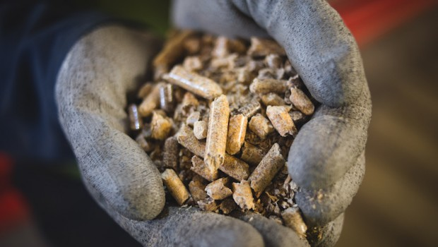 biomass wood pellets drax