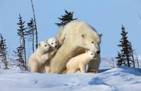 ep amenazala biodiversidad del artico