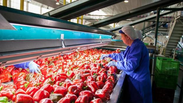 ep la demanda mundialproductos agricolas crecera un 15 enproxima decada segunfaoocde