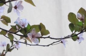 ep flor primavera medioambiente
