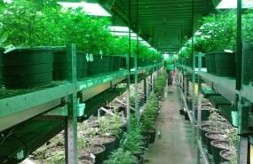 ep marihuana medicinal