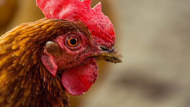 Why US trade deal could hinge on chickens