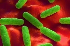 ep bacterias resistentesantibioticos